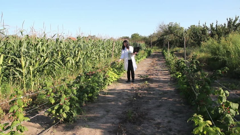 Agroecologia a profissao do futuro sustentavel