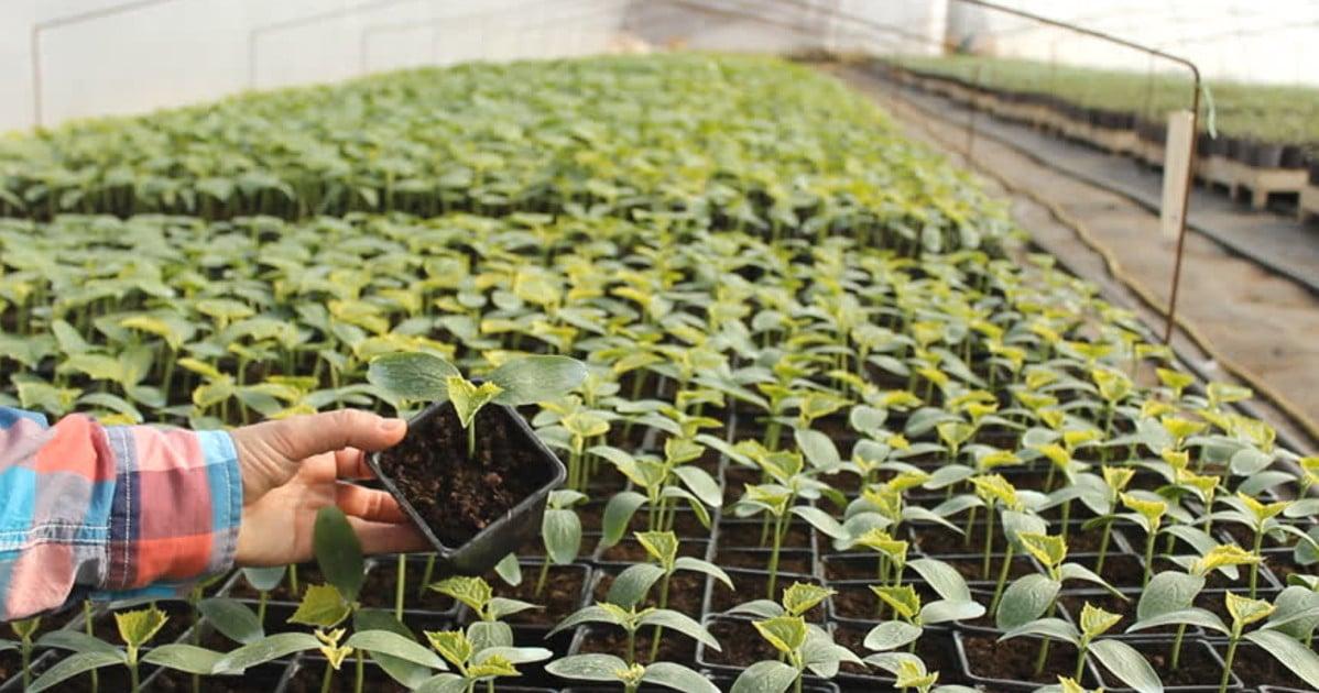 agroecologo o profissional em agroecologia
