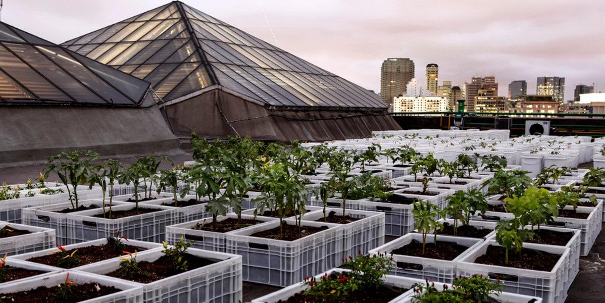 Horta urbana agroecologica em prédios em São Paulo