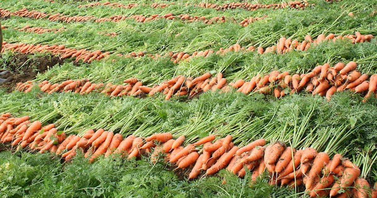 O que é agroecologia sítio pema