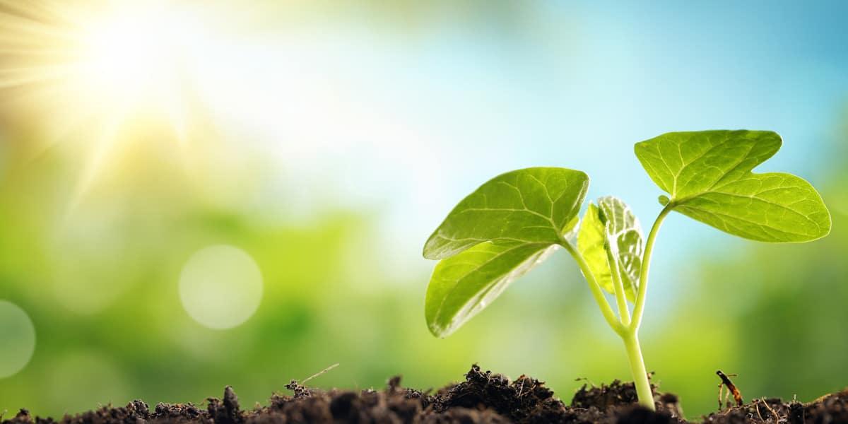 Educação Ambiental agricultura sustentável