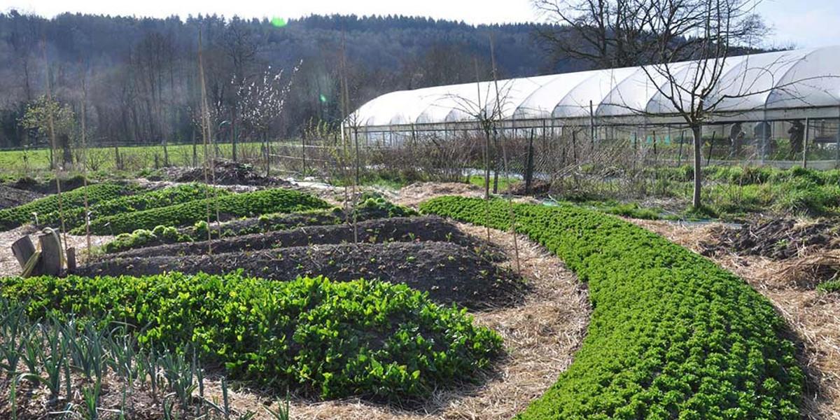 Permacultura o que é e como está mudando a agricultura e pessoas