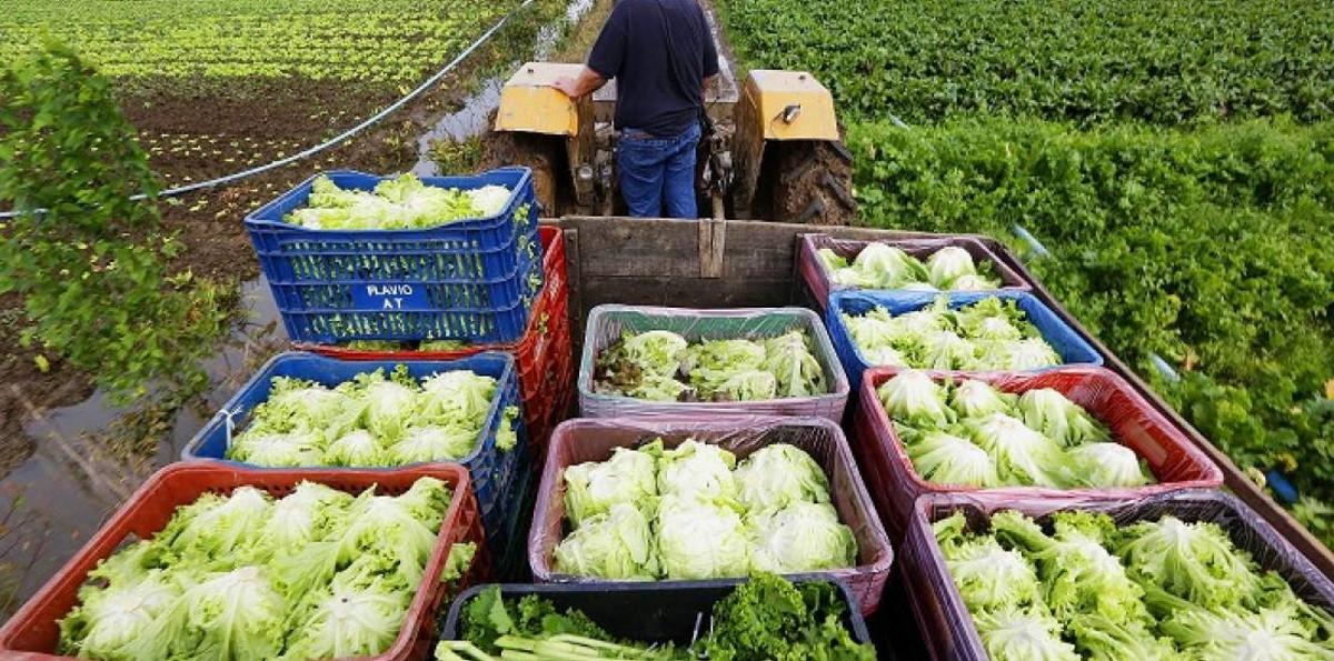 Agricultura familiar sustentabilidade e agronegocio