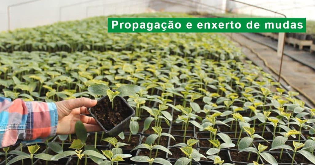 Enxerto de plantas e propagação de frutíferas