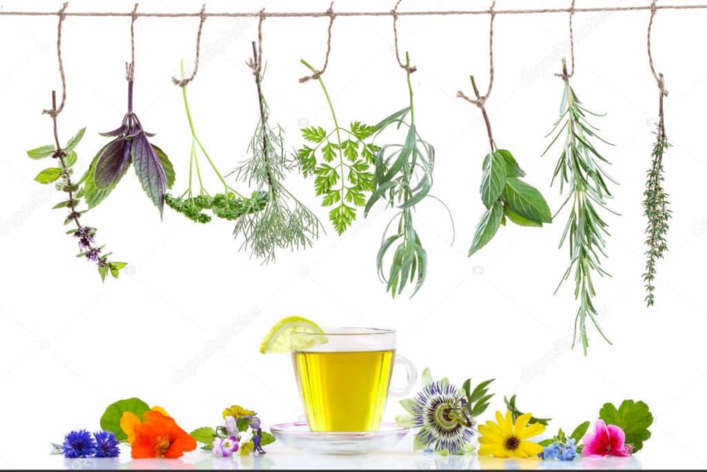 Lista de plantas medicinais e seus usos