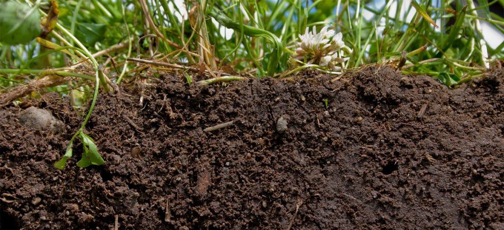 Aumente a fertilidade do solo usando adubação verde, produção orgânica