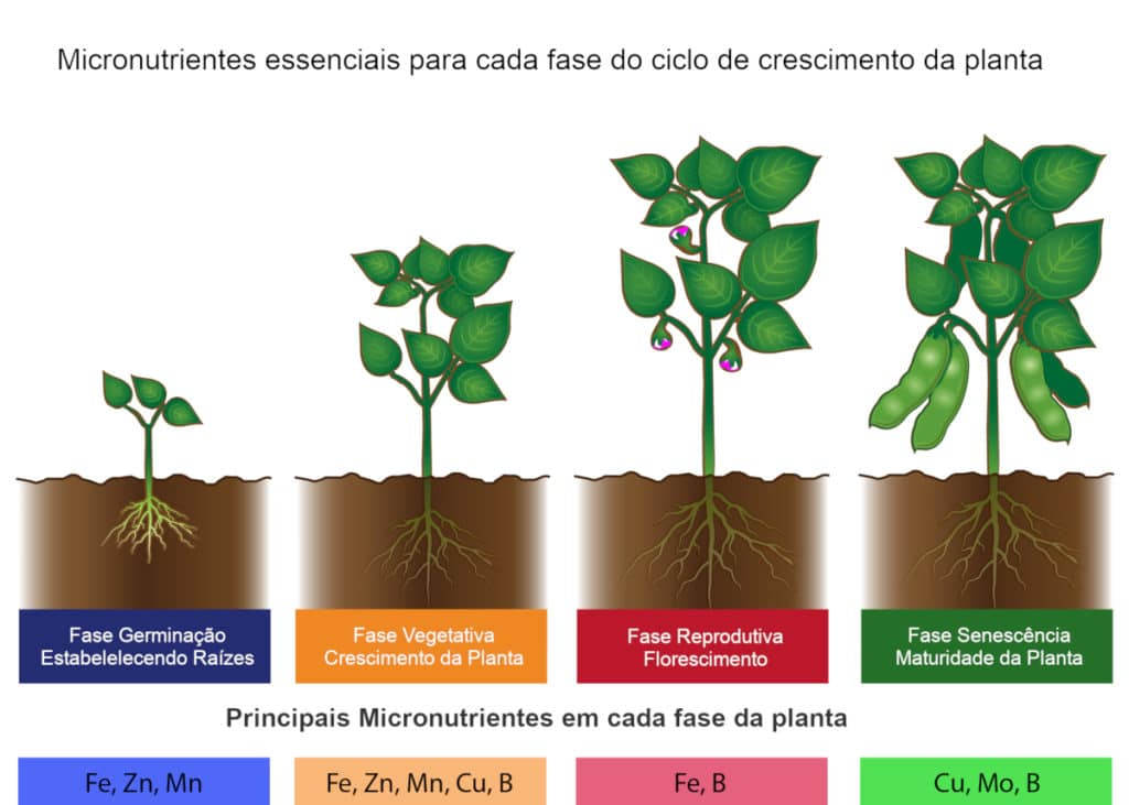Micronutrientes essenciais para cada fase de crescimento da planta