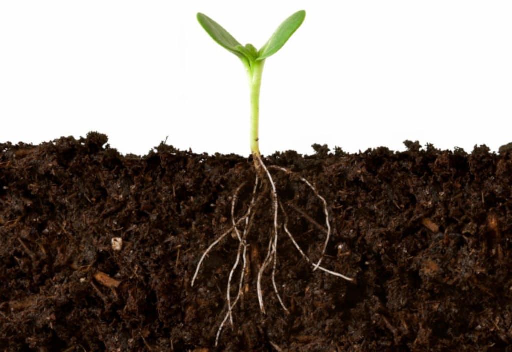 Micronutrientes essenciais para o solo. Cultivo de safra.