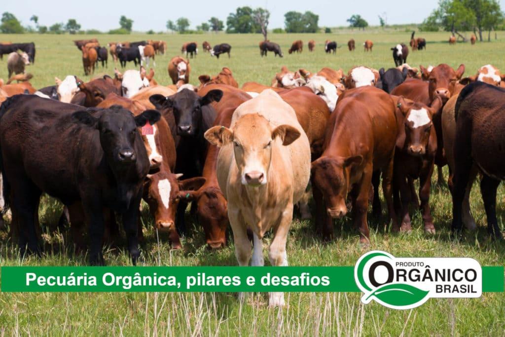 Pecuária Orgânica no Brasil, processo de certificação orgânica