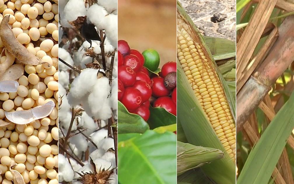 Produtos agrícolas, como aumentar a produtividade com eles