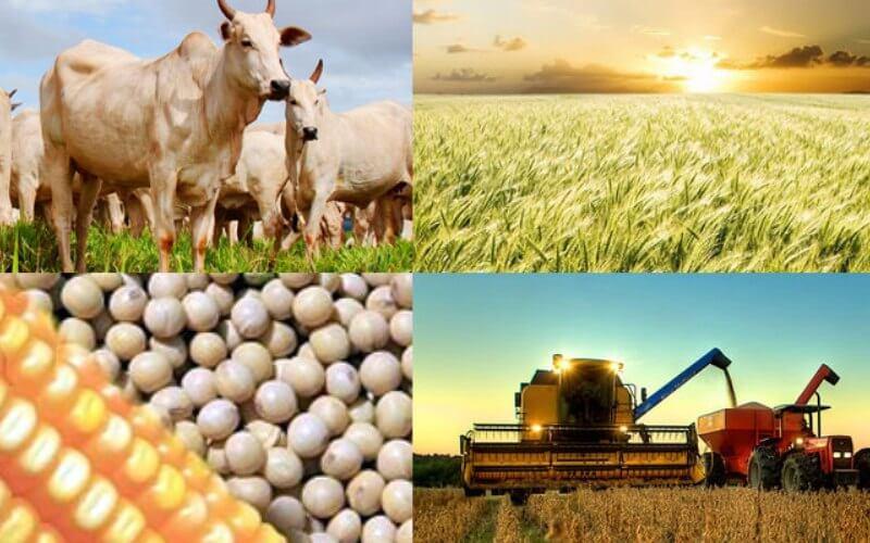 Produção agrícola como vender
