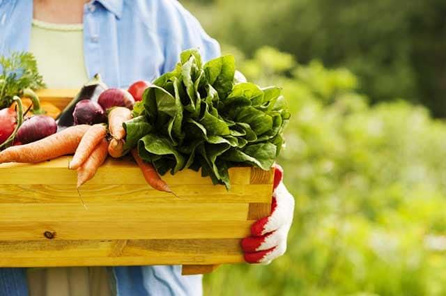 Porque as pessoas deveriam preferir frutas e verduras orgânicas