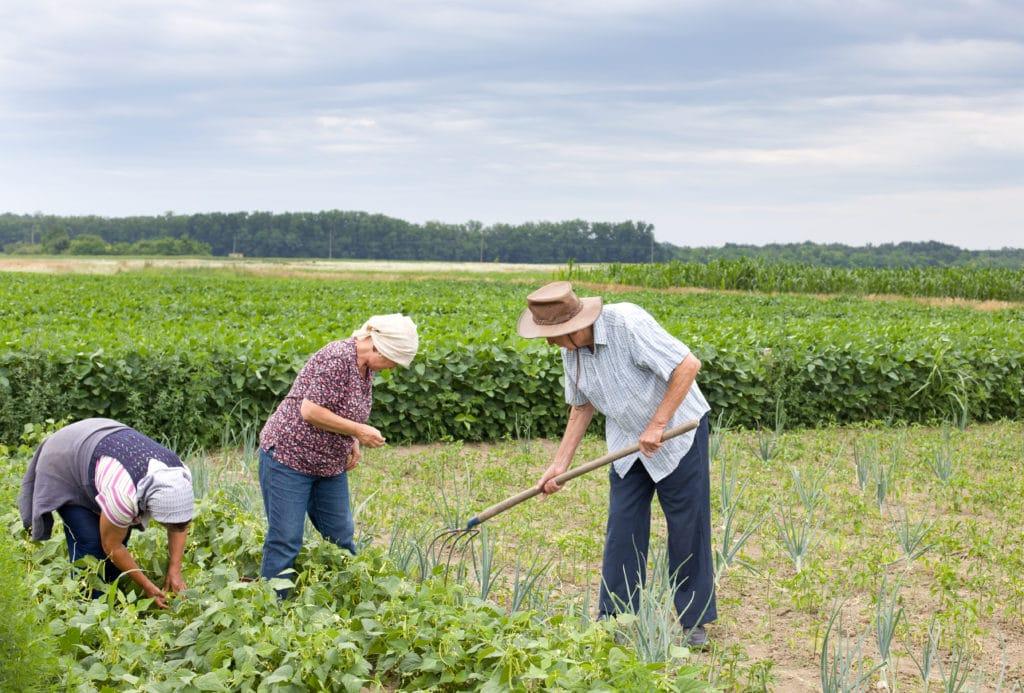Agricultura familiar: o que é e como funciona?