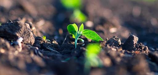 Qual a importância do solo para a agricultura e para a mitigação das mudanças climáticas?