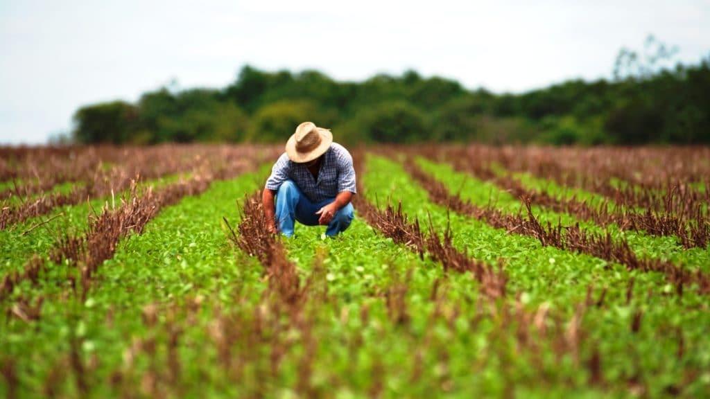 Agricultura orgânica triplica cadastros de produtores nos últimos anos