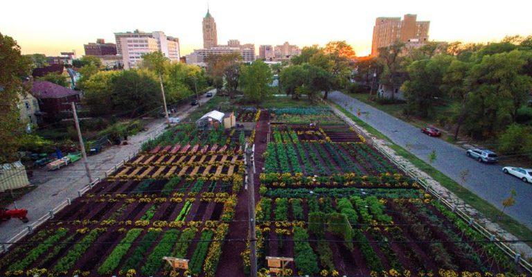 Agricultura Urbana: o que é e como funciona?