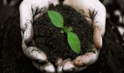 Macronutrientes: qual importância para o solo orgânico?