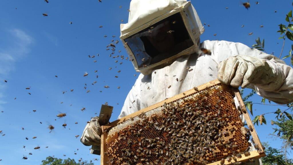 7 passos para começar a trabalhar com apicultura