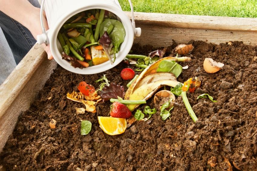 Fertilizantes orgânicos e seu uso na agricultura