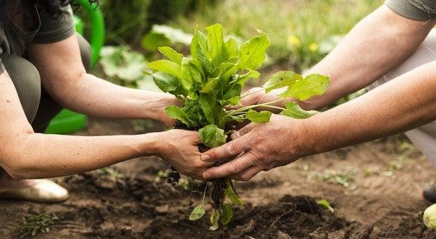 Agricultura sustentável: entenda o conceito e os benefícios