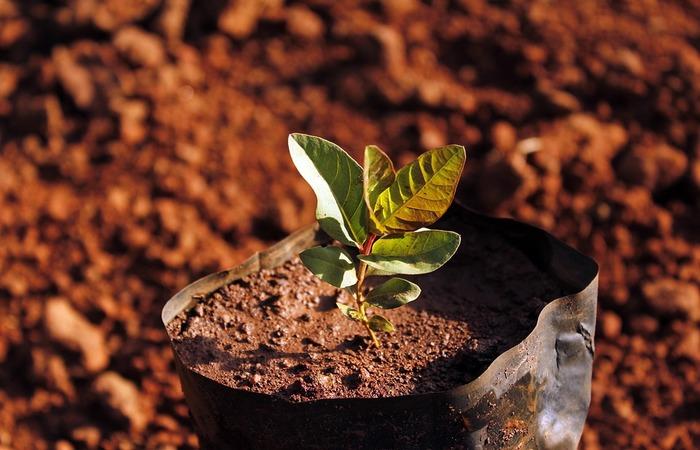 Árvores para Reflorestamento