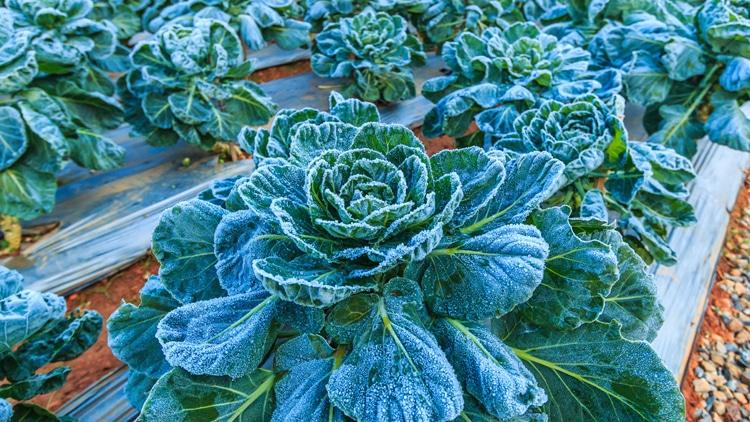 Plantar inverno